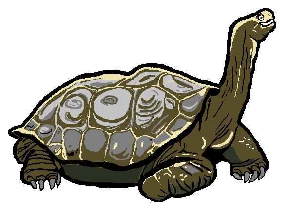 Tortoise Smiling